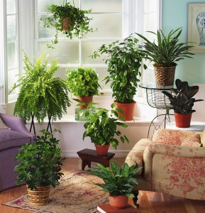 A group of houseplants in a room, green products for your house