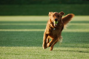 dog training ideas