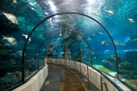 A great place to see the sea world, Barcelona Aquarium