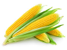 The corn