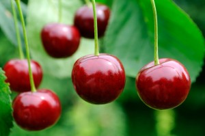 The tart cherries