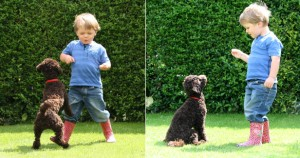 dog jumping on little boy then obeying wait command