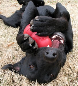 dog training ideas