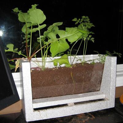 viewable root garden