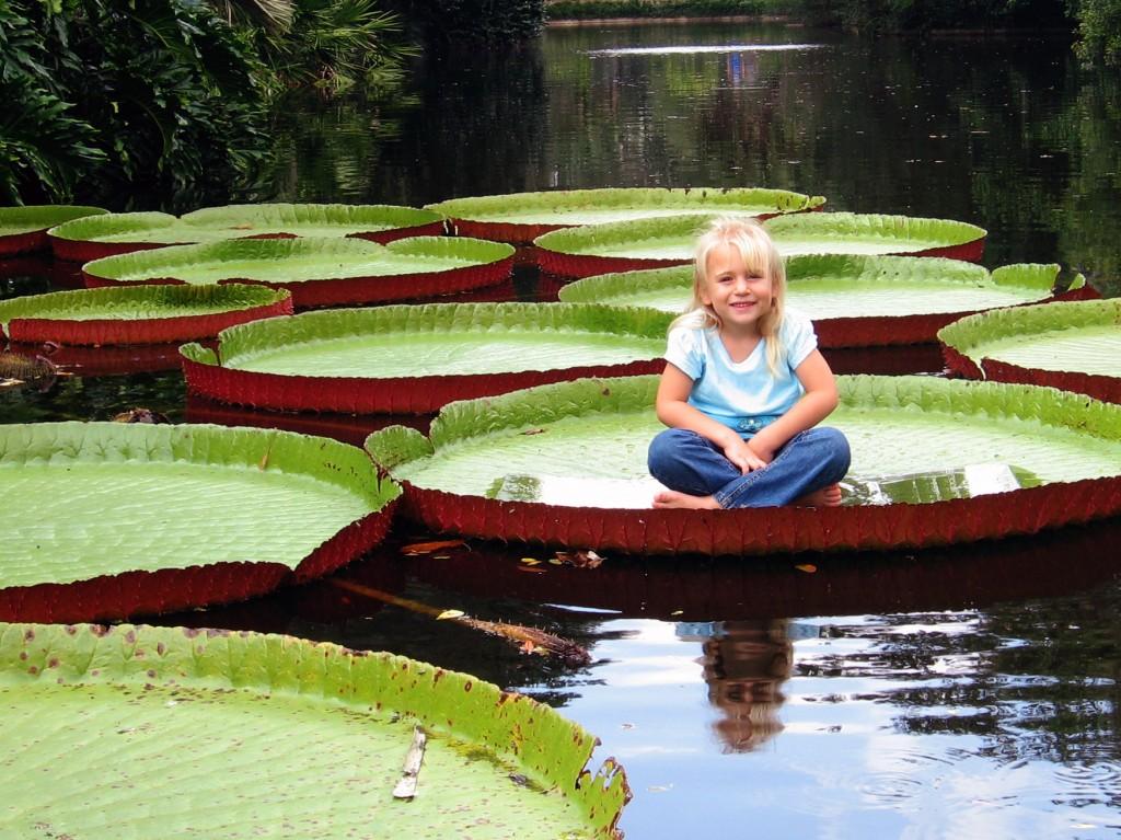 giant waterlilies